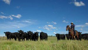 2016 Dulverton Bull Sale Report