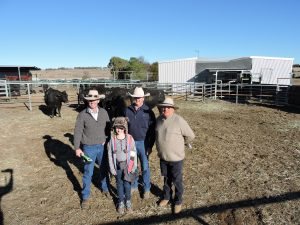 2018 Dulverton Angus Bull Sale Wrap Up