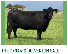 http://dulvertonangus.com.au/the-dynamic-dulverton-sale/