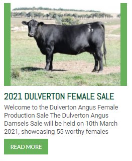 http://dulvertonangus.com.au/2021-dulverton-female-sale/