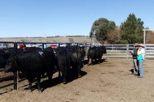 2012 Bull Sale