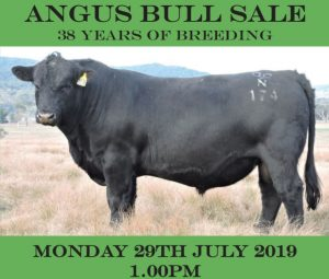 2019 Dulverton Angus Sale